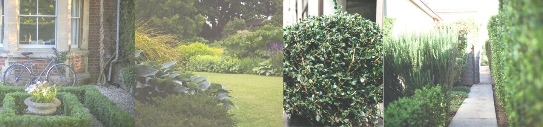 Professional Gardeners Clapham